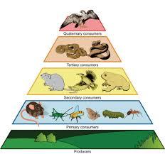 trophic level read biology ck 12 foundation