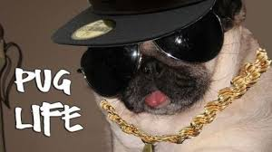 Best Memes 2014 - the best of thug life compilation animal edition video dailymotion