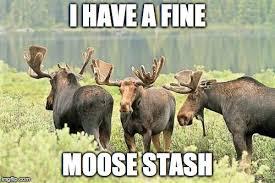 Moose Meme - fine moose stash imgflip