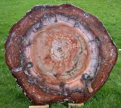 table tops and giant rounds of petrified wood