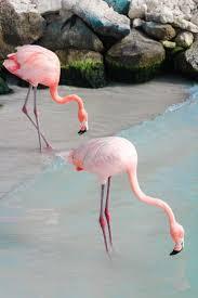 best 25 flamingos ideas on pinterest flamingo pink flamingos