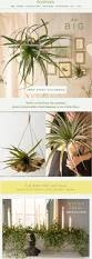 Terrain Home Decor by 215 Best Terrain 2014 Images On Pinterest Email Design Holiday