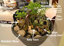 Fairy Garden Ideas For Kids by Enjoyable Fairy Garden Plants Excellent Ideas 17 Ideas About Fairy
