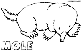 100 mole coloring page kids n fun com 16 coloring pages of