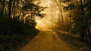 a heart of thanksgiving scripture let us walk in the light of god desiring god