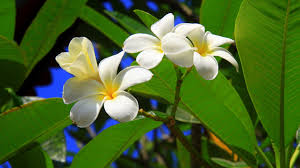 beautiful exotic flowers wallpaper 6774933