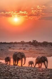 best 25 elephant family ideas on elephant pictures