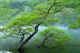 high quality trees free stock photos 19 625 free stock