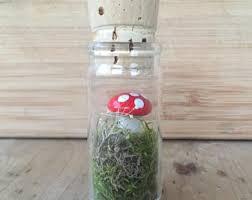 tiny terrarium etsy