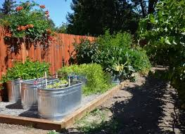 metal trough used as container for vegetable garden cucumbers