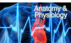 Why Is Anatomy And Physiology Important Anatomy Physiology Video Lectures Tutorials U0026 Courses