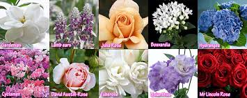 wedding flowers list april flowers for weddings top 10 wedding flowers months list of