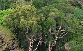 canopy amazon amazon rainforest or oil wealth ecuador s unique approach to solve