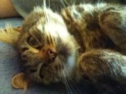 sexy dank cat memes home facebook