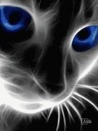 imagenes para whatsapp movibles descargar imagnes para whatsapp en movimiento gato daann