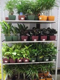 home depot plants home diy home plans database