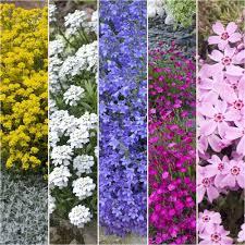 fleurs vivaces rustiques kits de plantes vivaces plantes et jardins