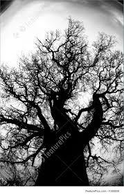 dead oak tree photo