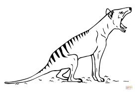 tasmanian tiger thylacine coloring page free printable coloring
