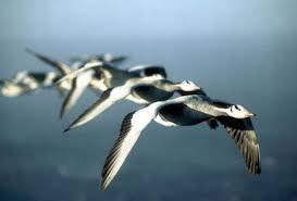 Seeking Wings Imdb The Demandments