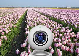 view the flower fields near amsterdam with the tulip webcams