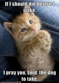 Funny Kitten Meme - kitten pictures funny impremedia net