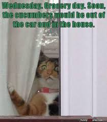 Sneaky Cat Meme - horror is green and sneaky lolcats lol cat memes funny