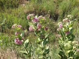 plants native to colorado habitat cwh colorado wildlife federation