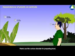 dependence of plants on animals youtube
