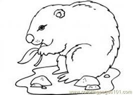 groundhog coloring free groundhog woodchuck coloring