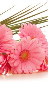 samsung flower wallpapers group 35