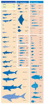 sea creature catalog posters and illustrations pinterest