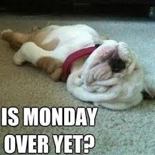 Funny Monday Meme - dog meme monday funny dog memes is monday over yet best dog