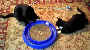 Cat Scratcher Replacement Pads Cat Turbo Scratcher Youtube