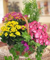 blooming garden basket floral arrangements beneva flowers