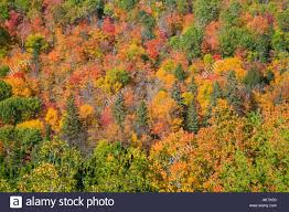 colorful trees autumn northern ontario algonquin park