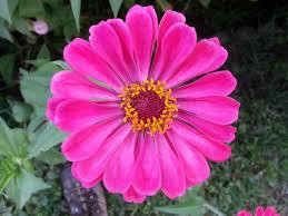 easy cut flower garden for kids faith family and technology