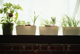 5 indoor garden kits for any herb lover