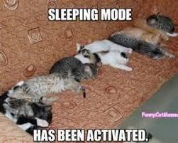 Funny Kitten Meme - it s always the dog s fault funny kitten meme funny kitten memes
