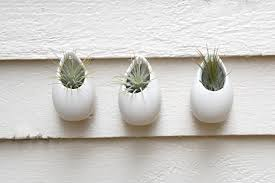 set of 3 mini matte white ceramic hanging planters wall