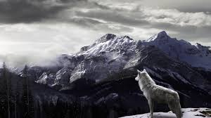 wolf wallpapers hd pictures u2013 one hd wallpaper pictures