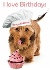 happy thanksgiving dachshunds birthday greetings