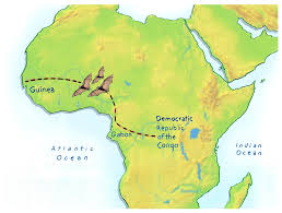 Gabon Africa Map by Ebola In The Skies How The Virus Made It To West Africa Ncpr News