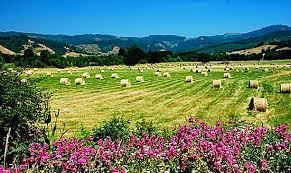 Valley Oregon Find In Camas Valley Travel Oregon