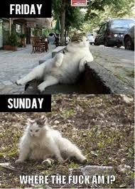 Drunk Cat Meme - blackout drunk cat 7jokes funny animals pinterest drunk cat