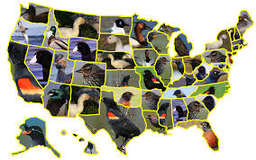 the birder u0027s conundrum united states of birds all time high counts