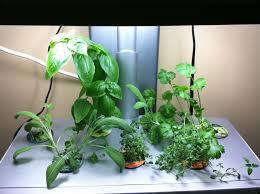 update on the aerogarden chili and herbs indoor gardening my