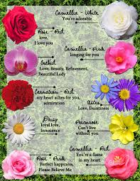 Fascinating Meaning by Meaning Of A Flower The Fascinating Wedding Flower Meanings