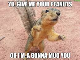 Squirrel Meme - squirrel meme by jimenopolix on deviantart