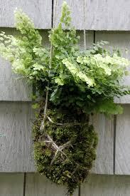 make a kokedama string garden hgtv